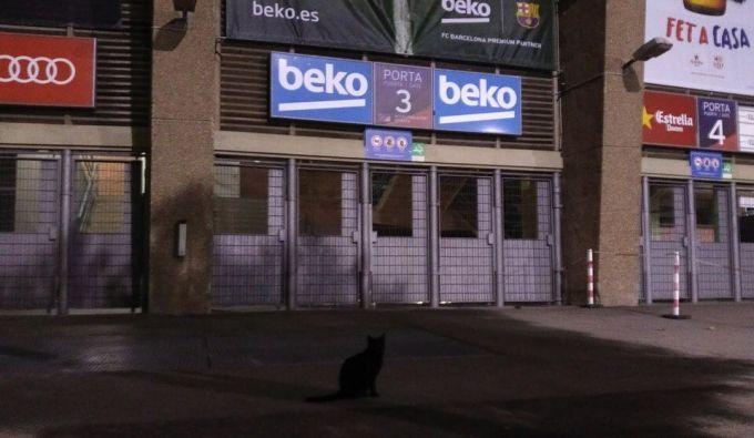 """Koutino transferi elon qilinganidan keyin """"Kamp Nou"""" yaqinida mashxur qora mushuk paydo bo'ldi + FOTO"""